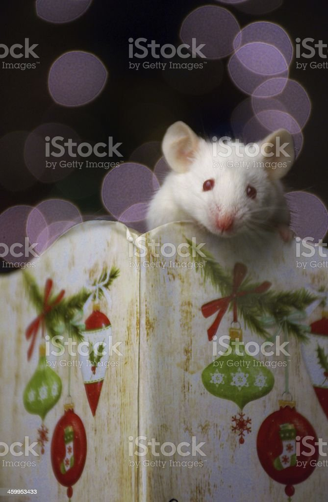 Holiday Mouse stock photo