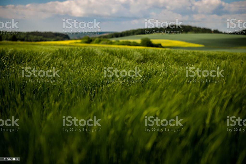 Holiday on green / Sunshine, green fields and blue Sky stock photo