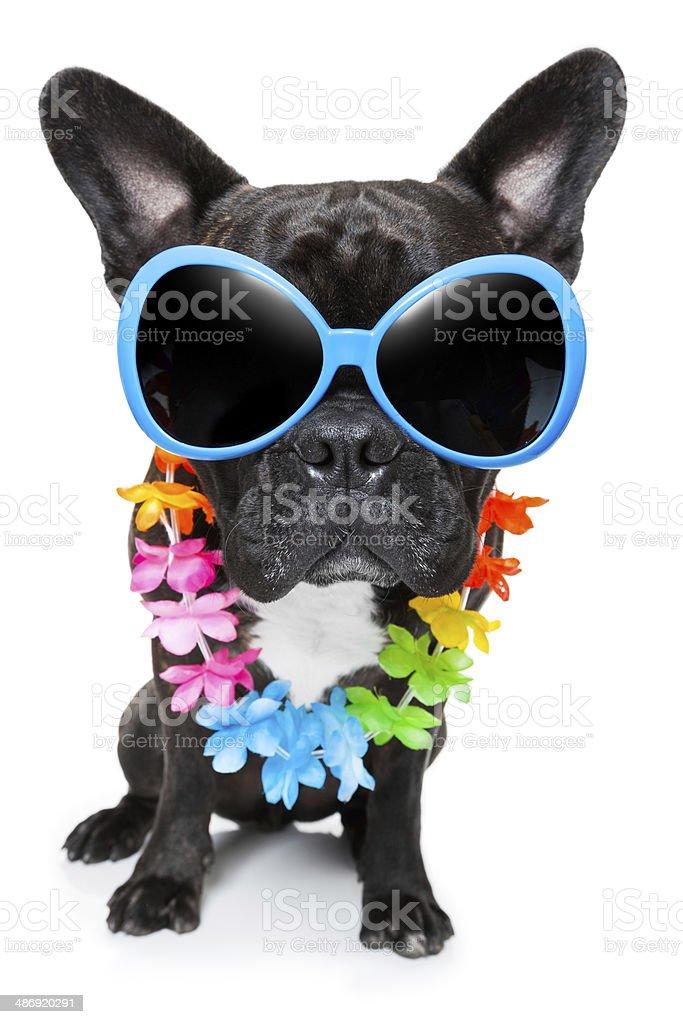 holiday summer dog stock photo