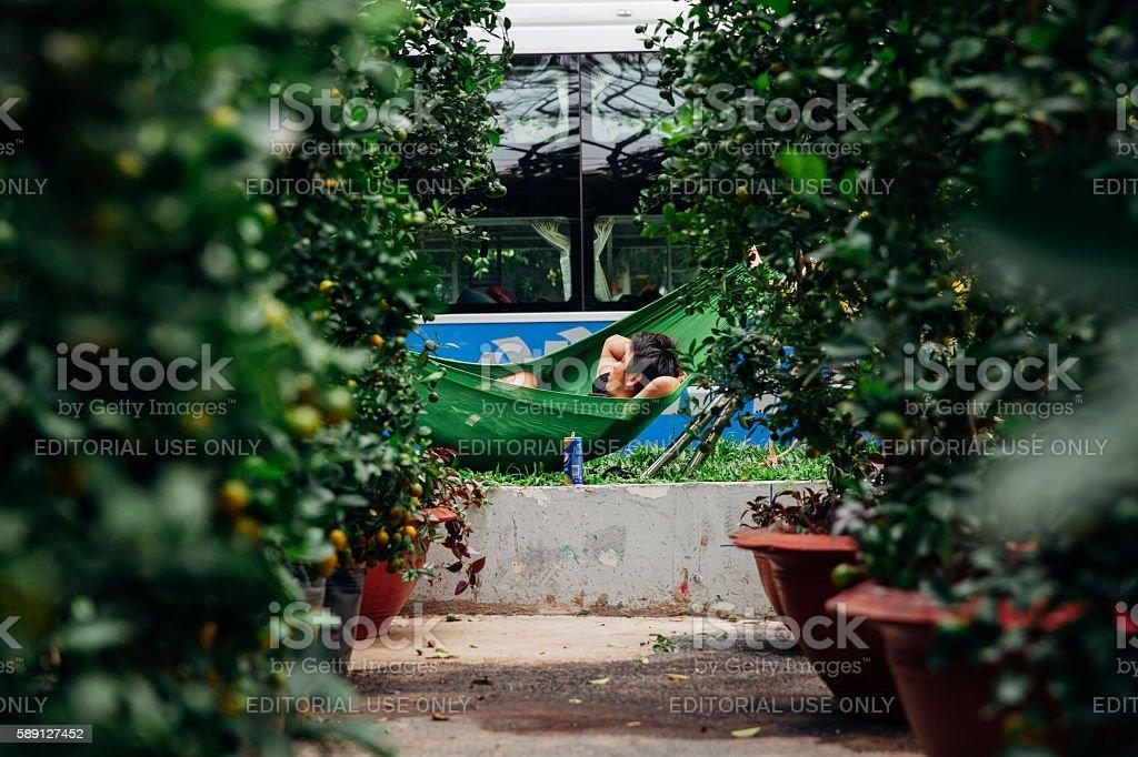 Holiday trees market at Ho Chi Minh City, Vietnam stock photo