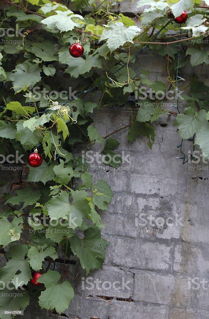 Holiday Vine frame royalty-free stock photo