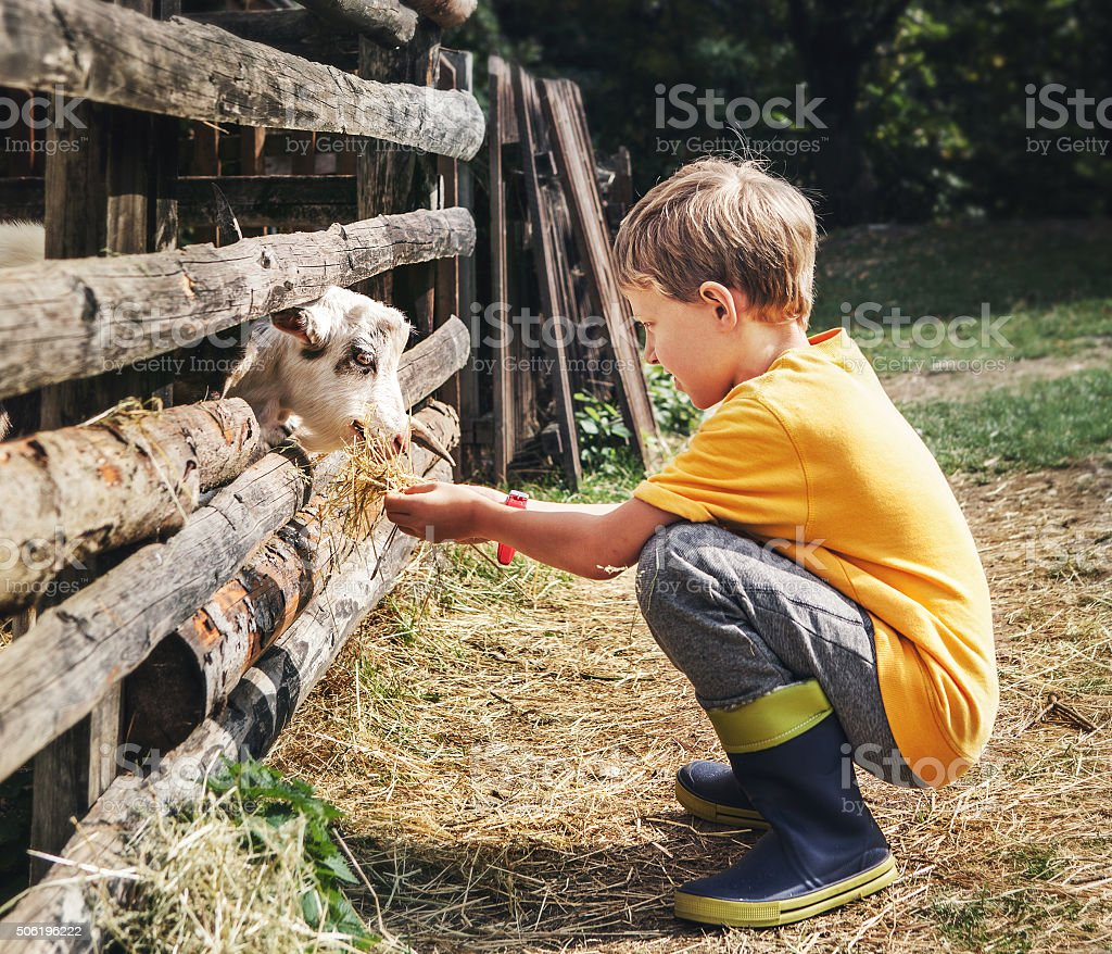 Holidays in the country - little boy feeds a goat stock photo