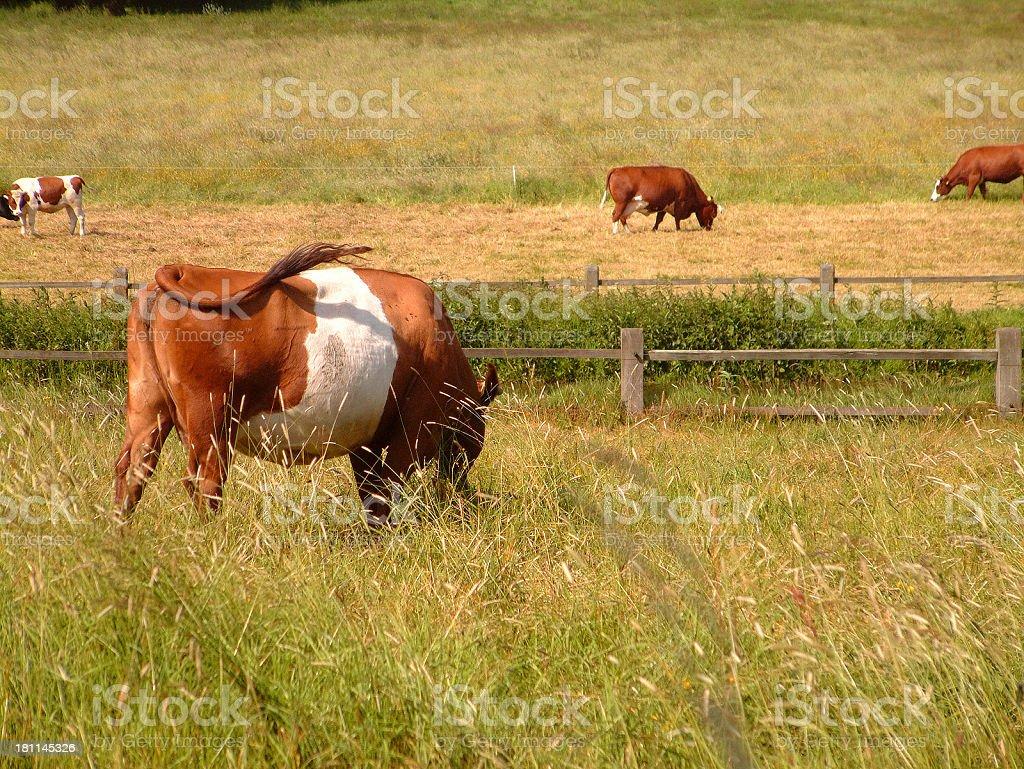 Holland landscape stock photo
