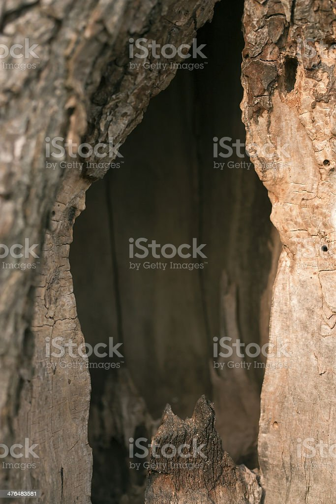 Hollow in tree stock photo