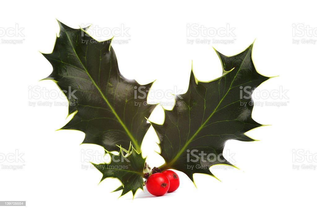 Holly and red berries stock photo