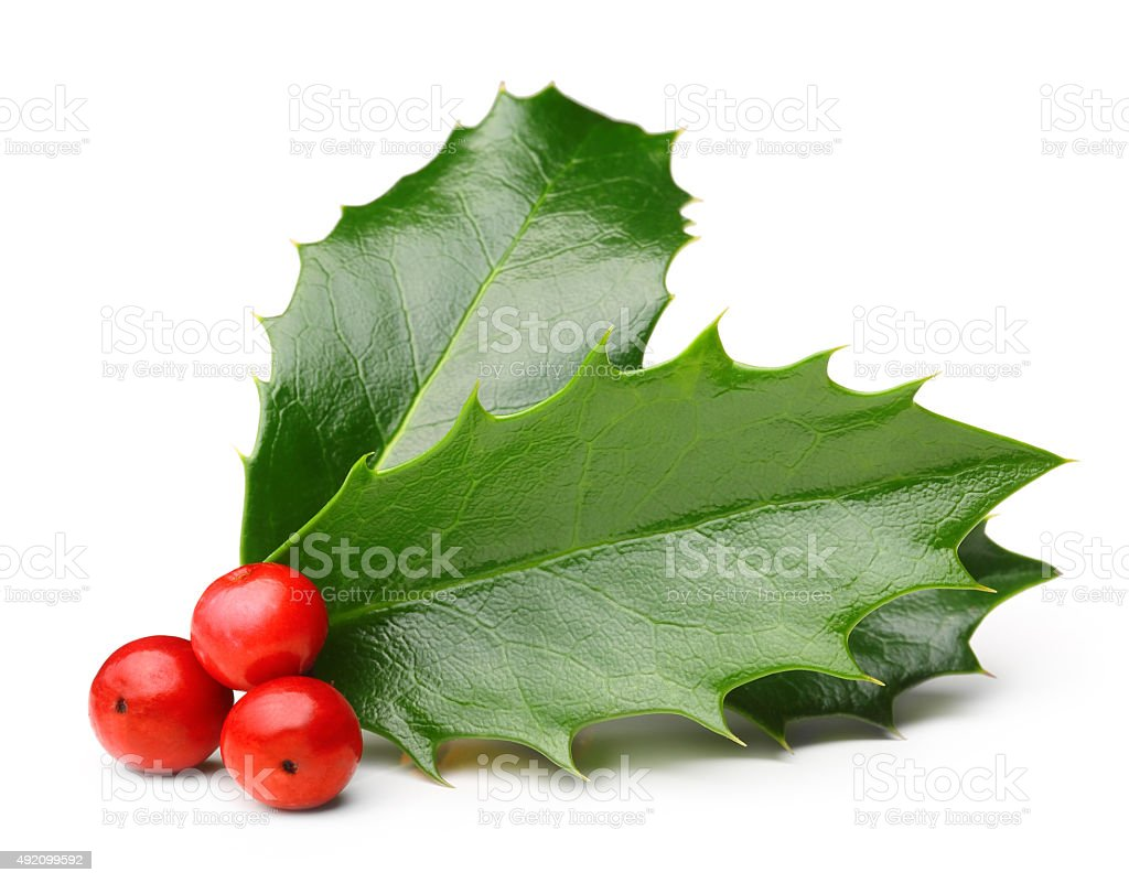 Holly berry leaves isolated stock photo