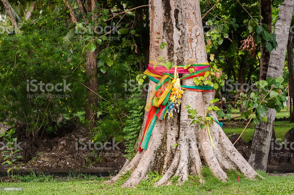 Holly Bodhi Tree stock photo