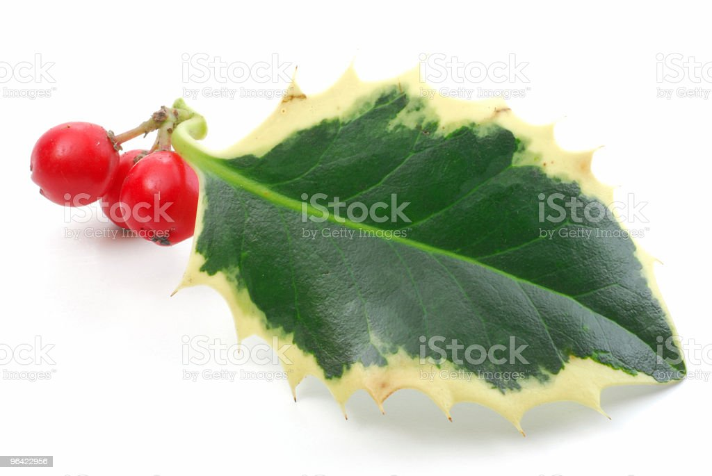 Holly branch with berries stock photo