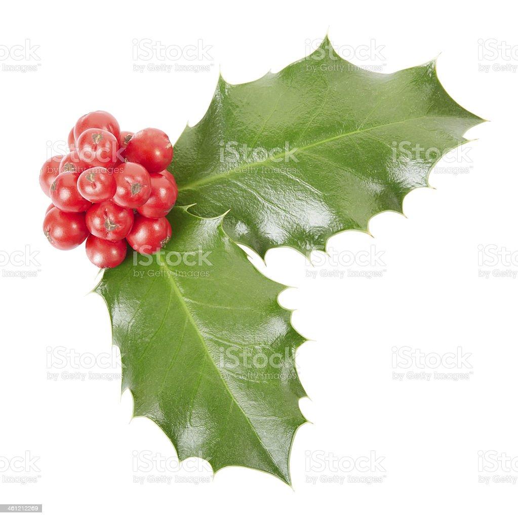 Holly, Christmas decoration stock photo