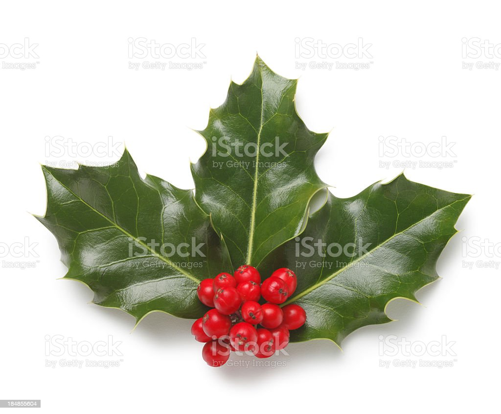 Holly Corner royalty-free stock photo