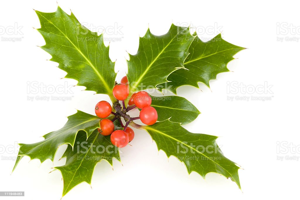 Holly for christmas royalty-free stock photo