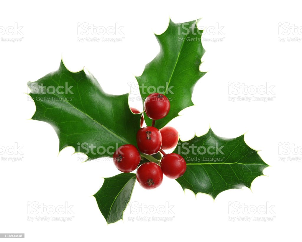 Holly Isolated on White royalty-free stock photo