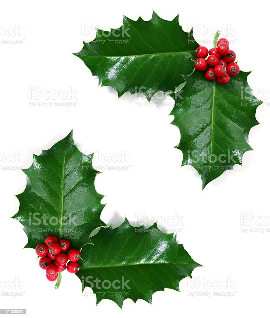 Holly Leaf, Isolated on White stock photo