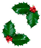 Holly Leaf, Isolated on White