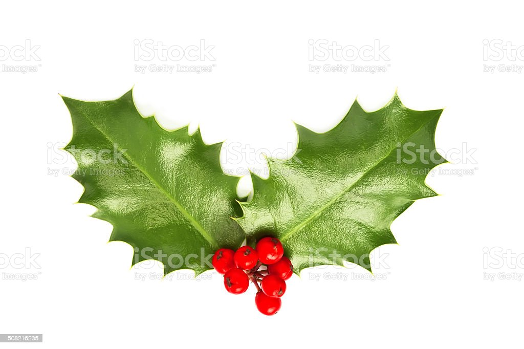 Holly leaves and berries isolated on white background stock photo