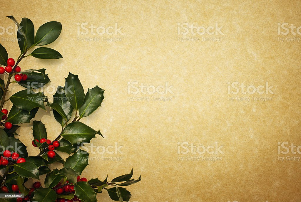 Holly on Parchment paper stock photo