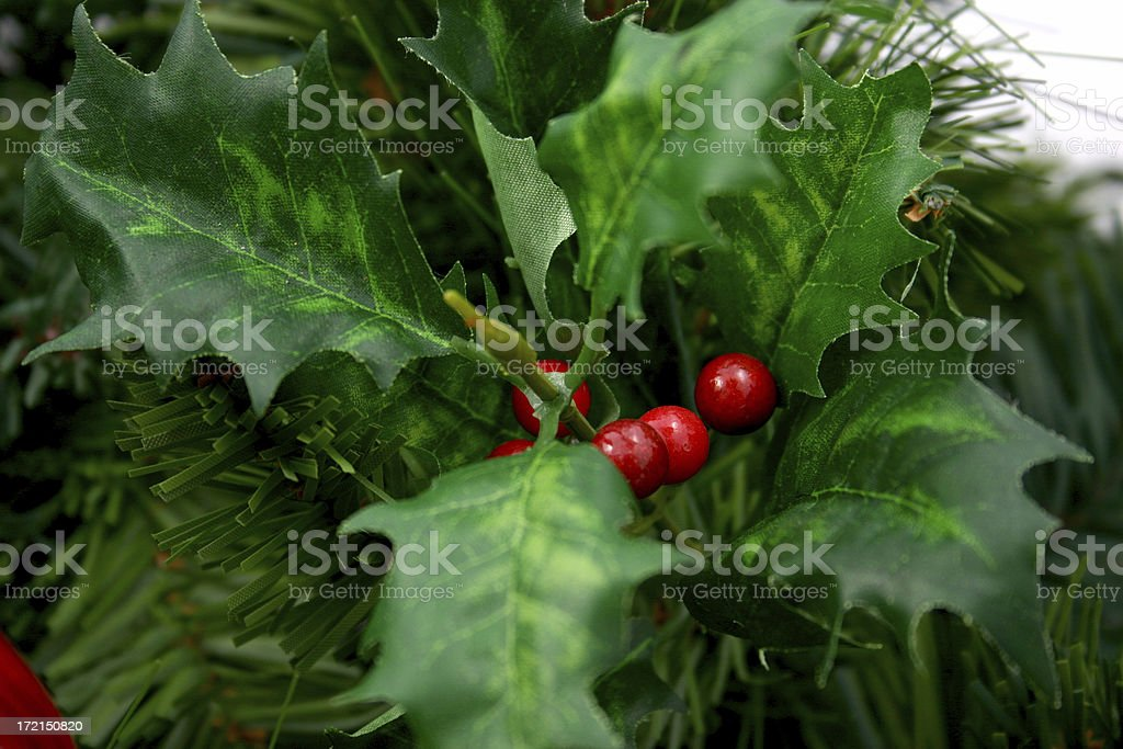 holly on white royalty-free stock photo