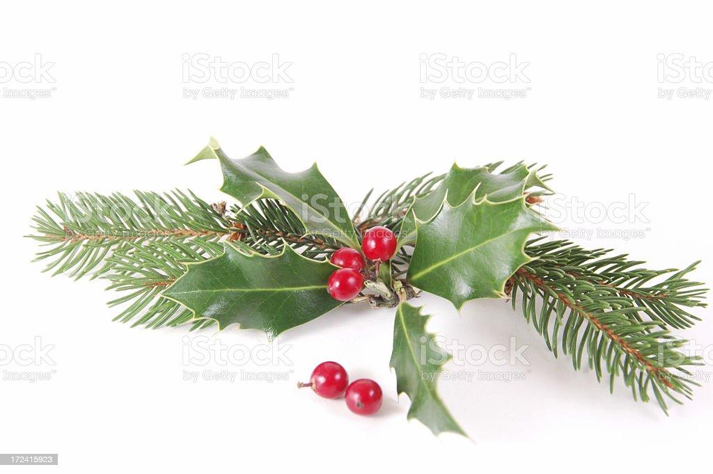 Holly pine royalty-free stock photo