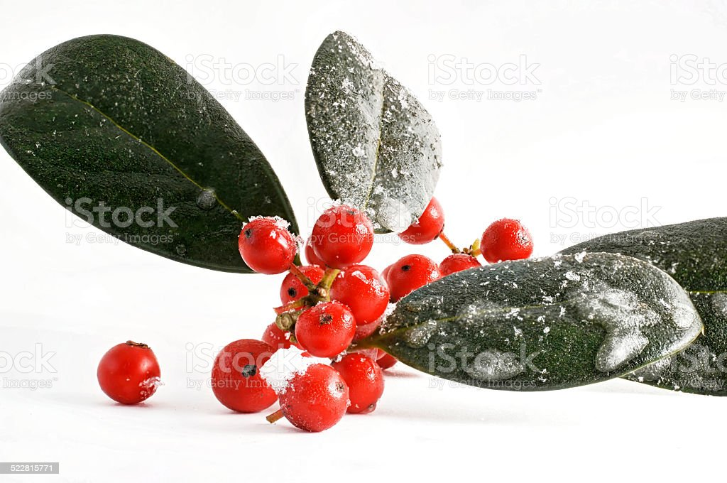 Holly red berries Christmas decoration stock photo