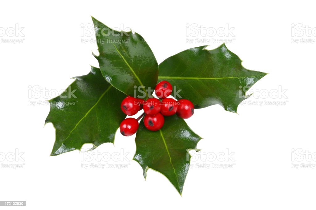 Holly Series (WITH A CLIPPING PATH!) stock photo