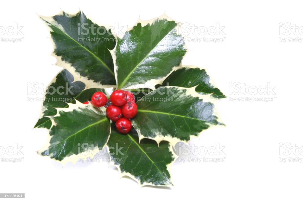 Holly Series royalty-free stock photo
