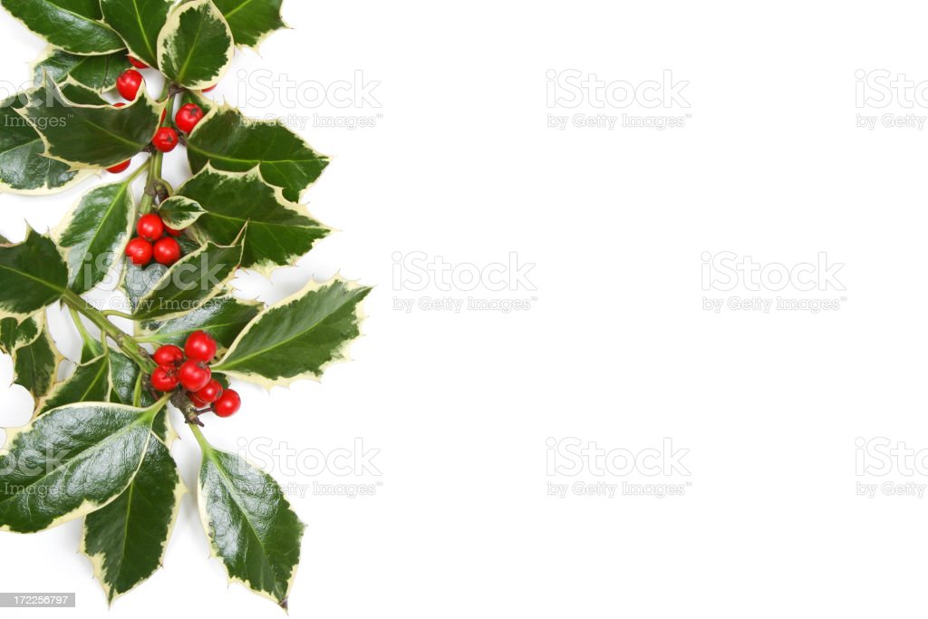 Holly Series stock photo