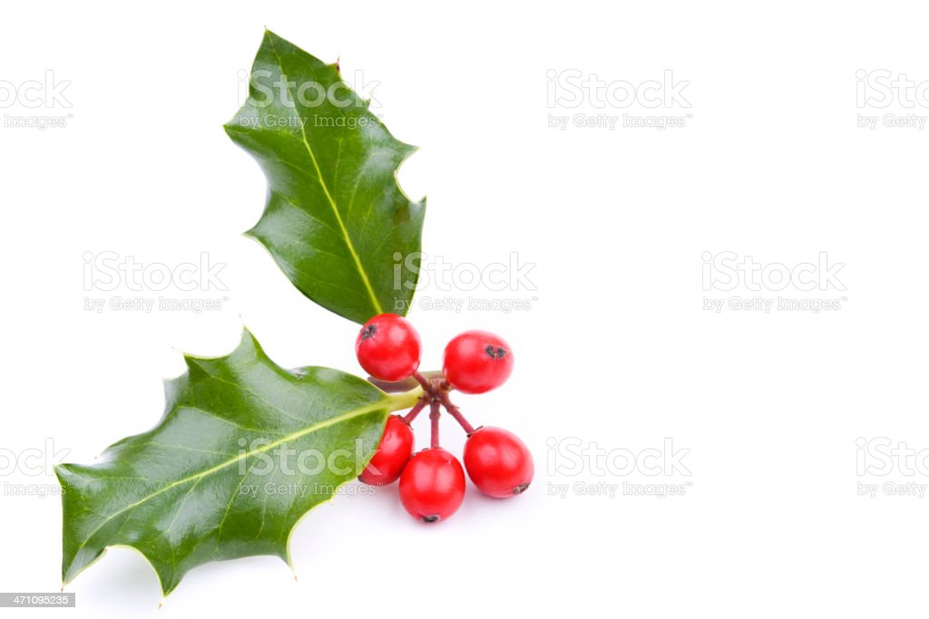 Holly Series (XL) royalty-free stock photo