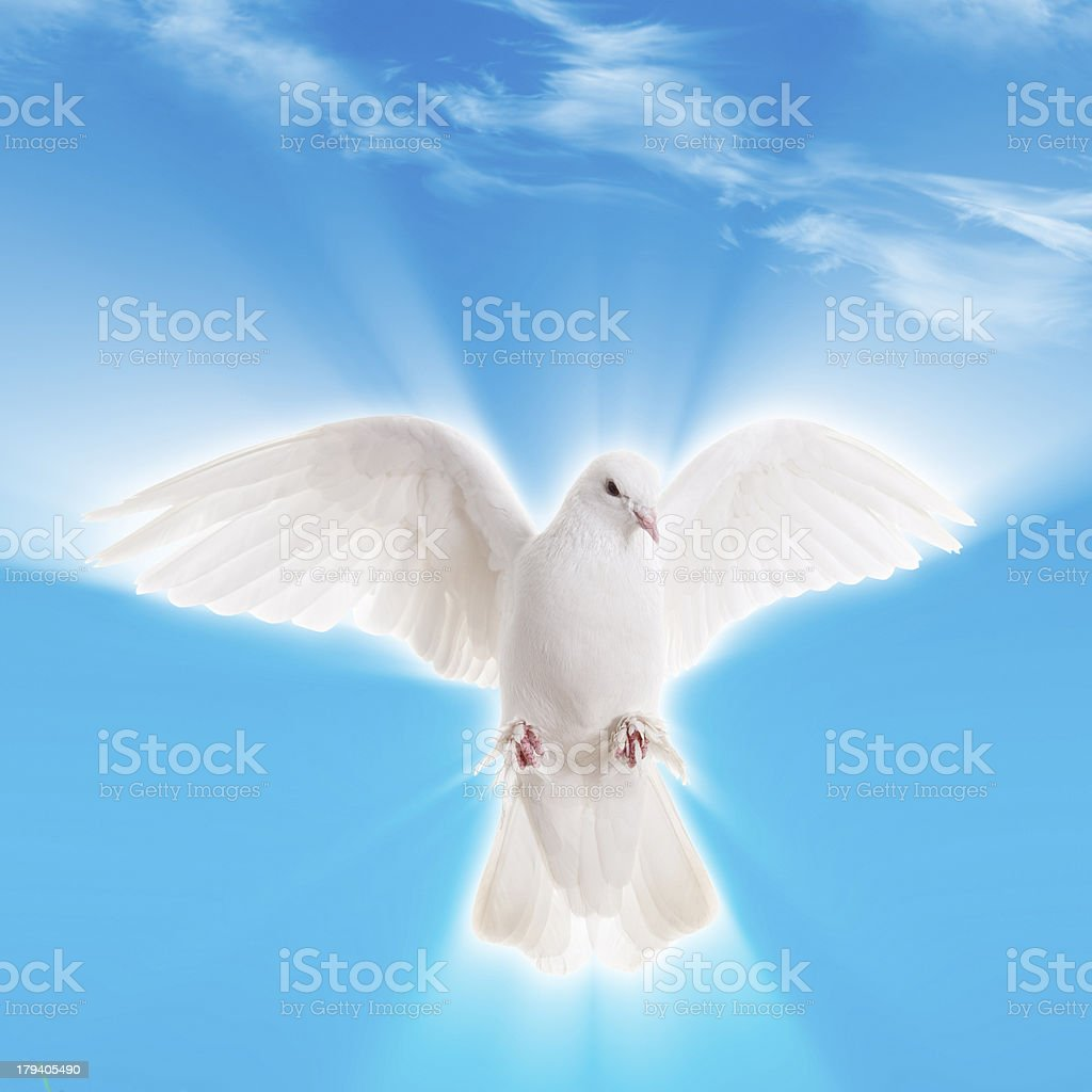 holly spirit royalty-free stock photo