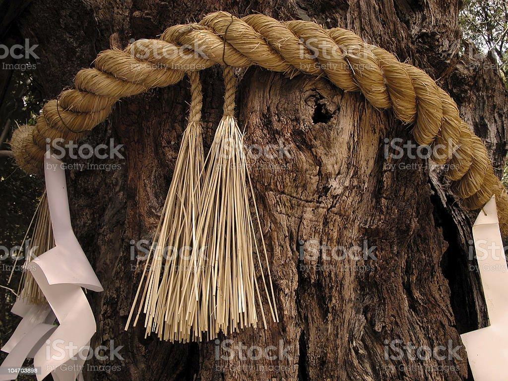 Holly tree stock photo