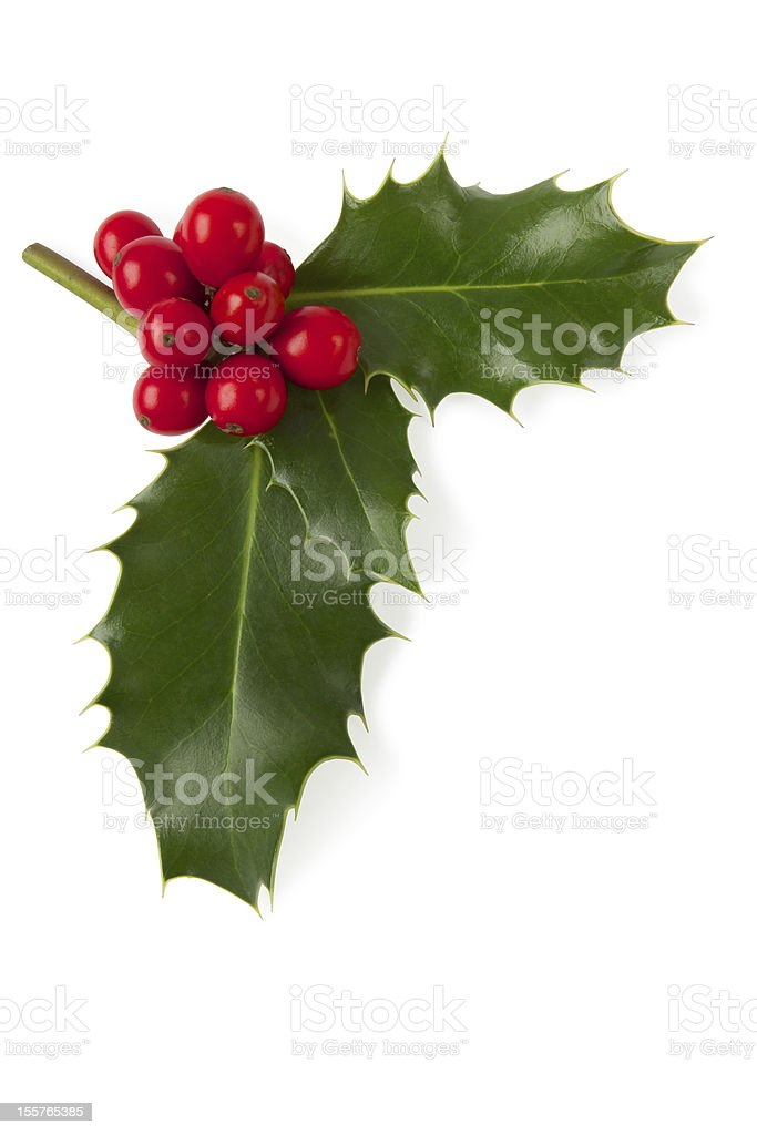 Holly with berries. Clipping path included. stock photo
