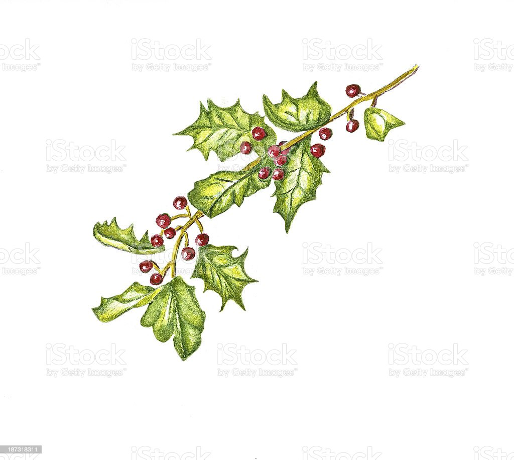 Holly with red berries with copy space. stock photo