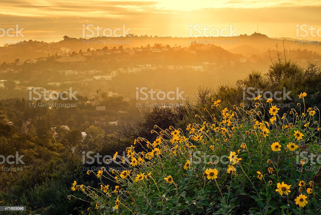 Hollywood Hills Mountain Landscape with Flowers Los Angeles stock photo
