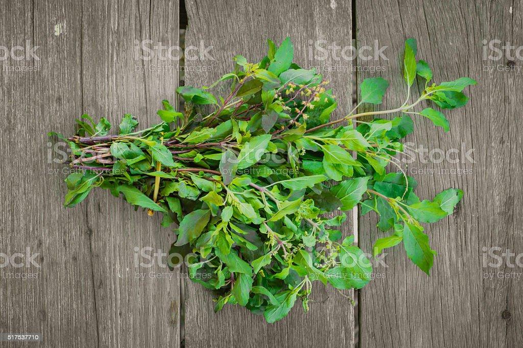 Holy Basil leaf herb ingredient of Thai food. stock photo