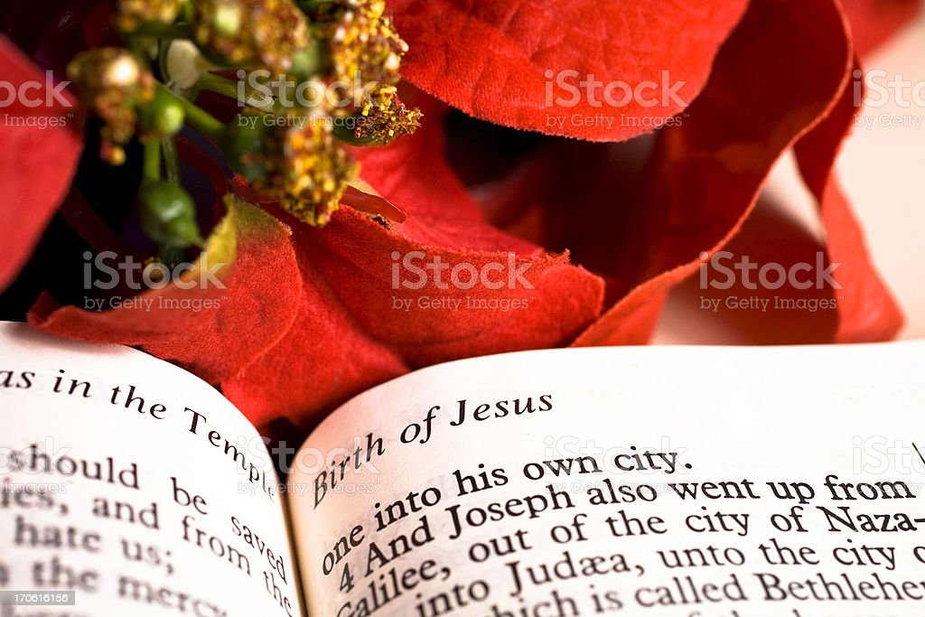 Holy Bible - Christmas Poinsettia. Birth of Jesus story. Text. stock photo