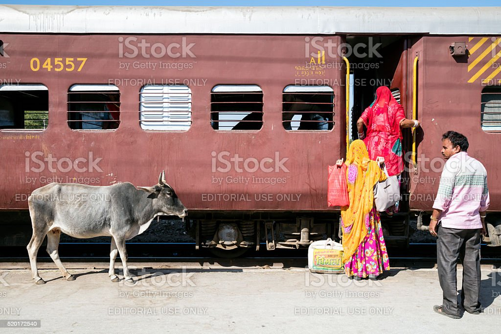 Holy cow next to train and passengers, Phulad, Rajasthan, India stock photo