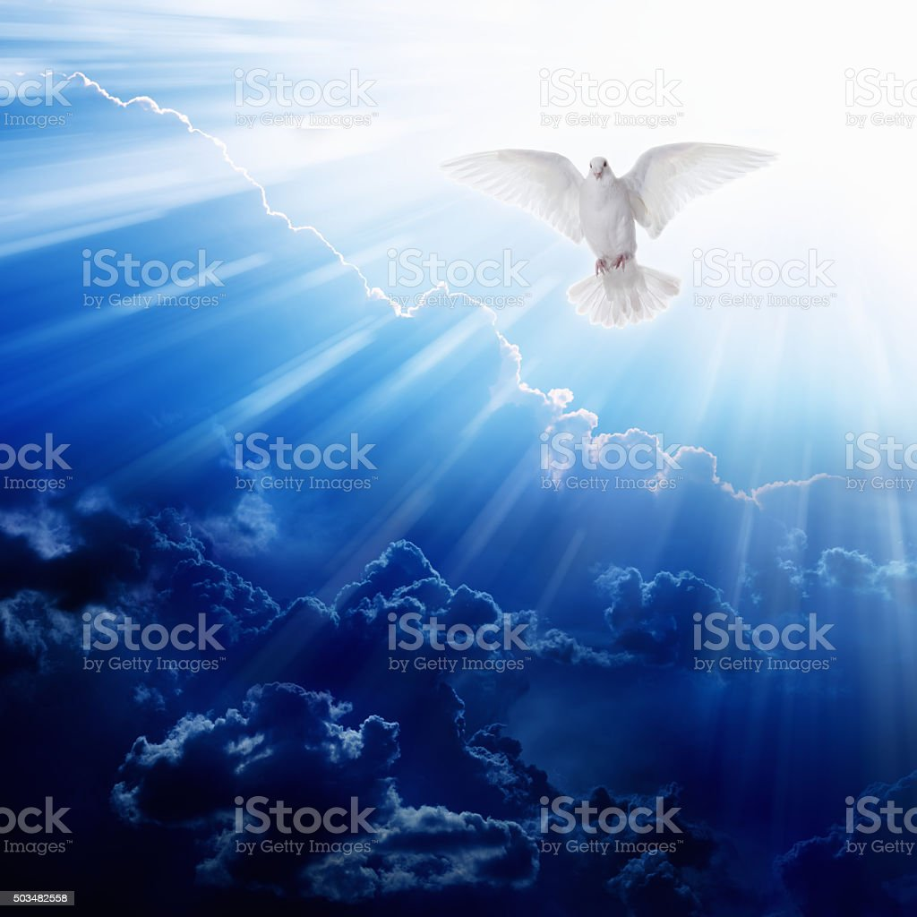 Holy spirit bird stock photo
