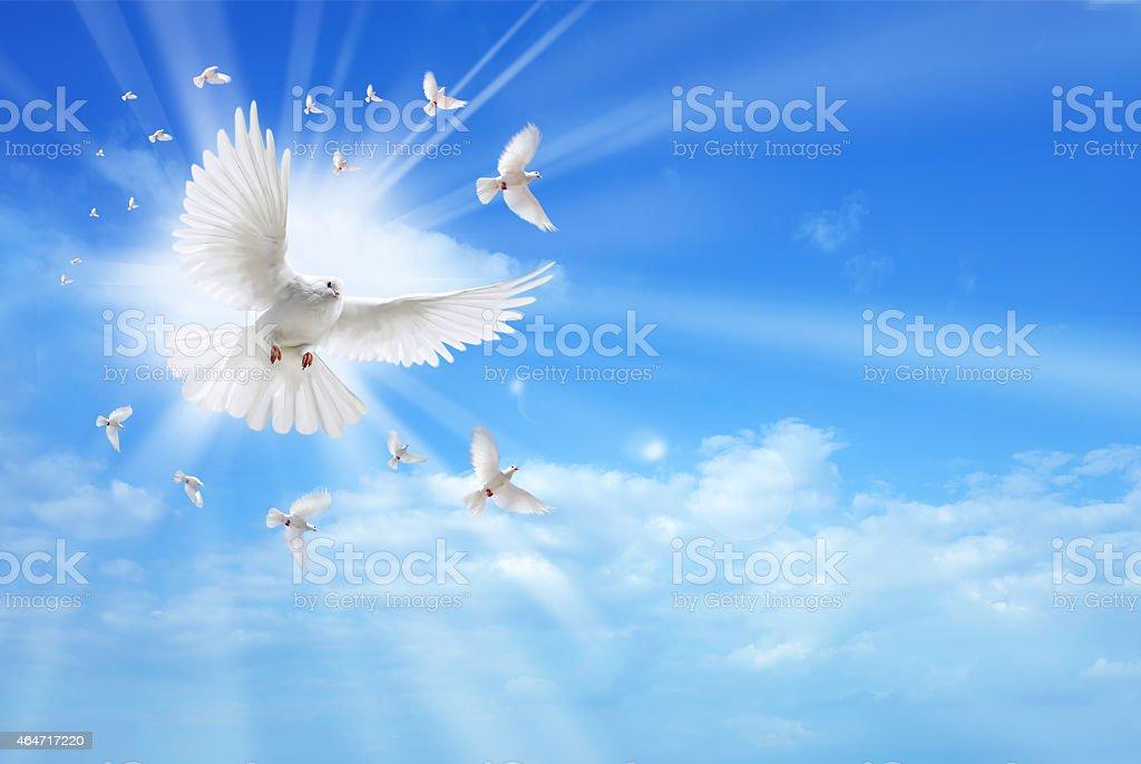 Holy spirit dove flying in the sky stock photo