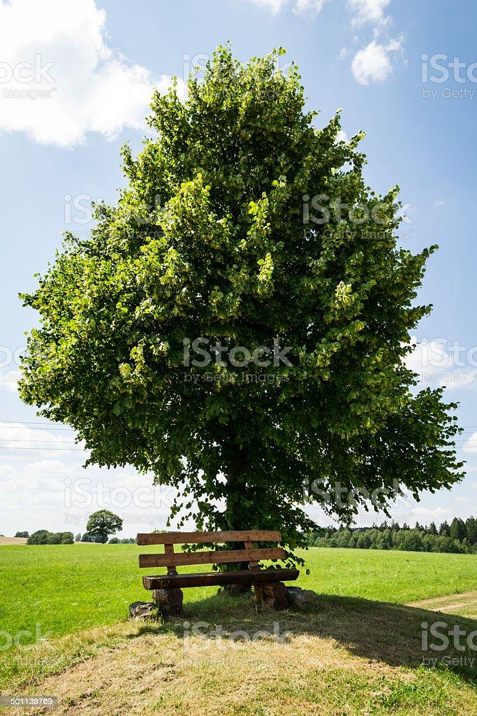 Holzbank vor einem Baum stock photo