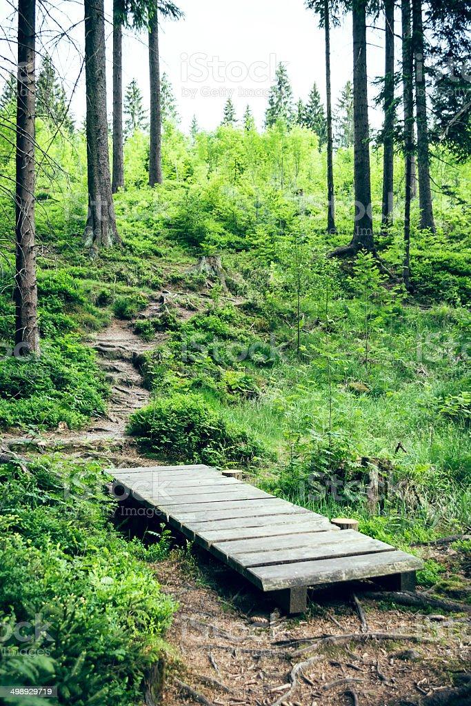 Holzbr?cke im Wald stock photo