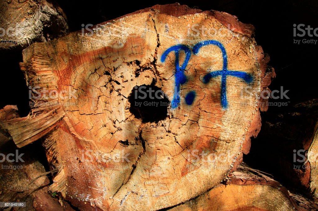 Holzfaeule in einem Baumstamm stock photo