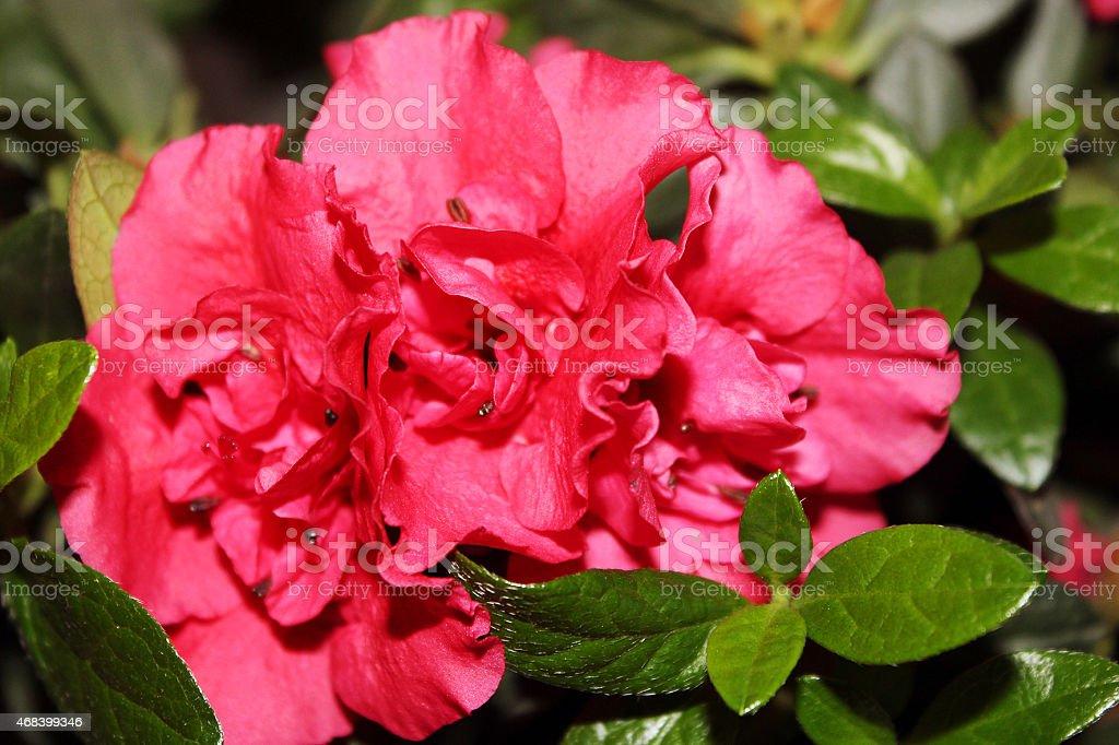 Maison des fleurs en pots photo libre de droits