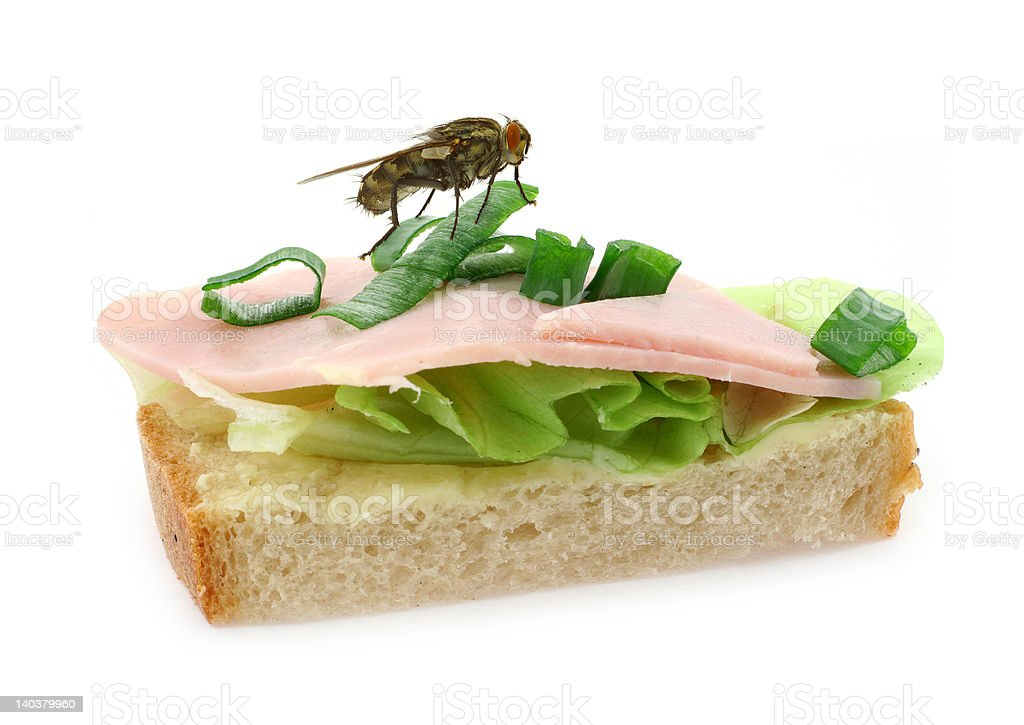home fly sitting on delicious ham sandwich royalty-free stock photo