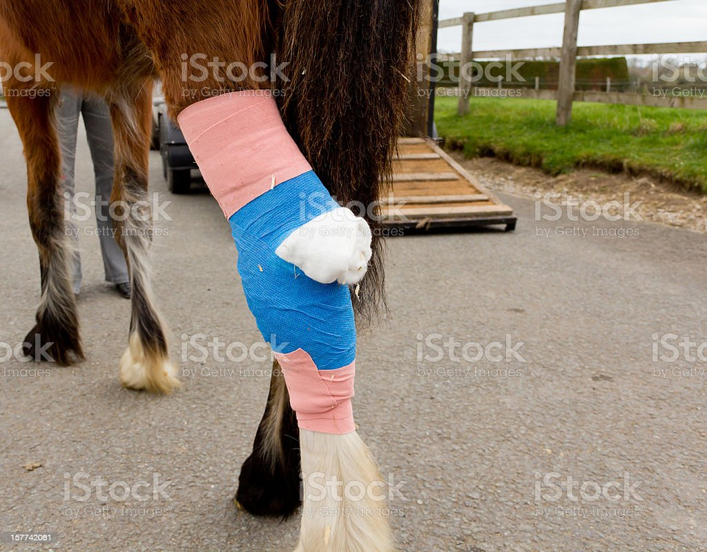 Home from horse hospital stock photo