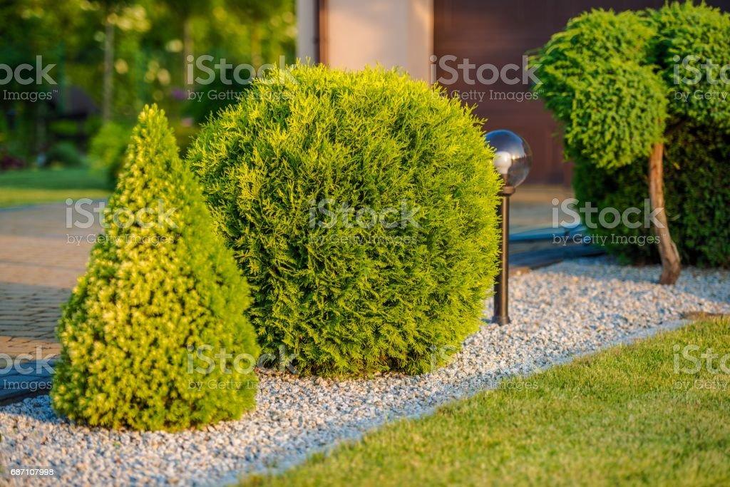 Home Front Garden Plants stock photo