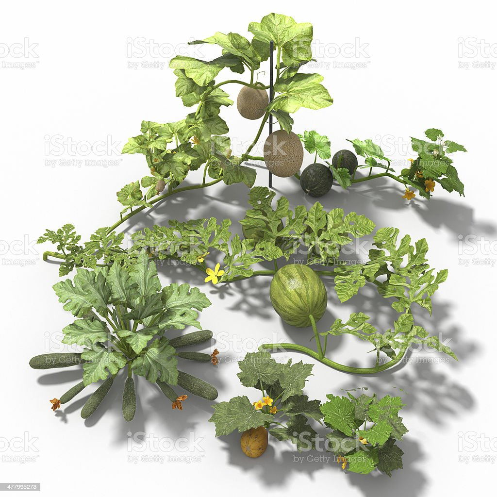 Home Garden Creeping plants royalty-free stock photo