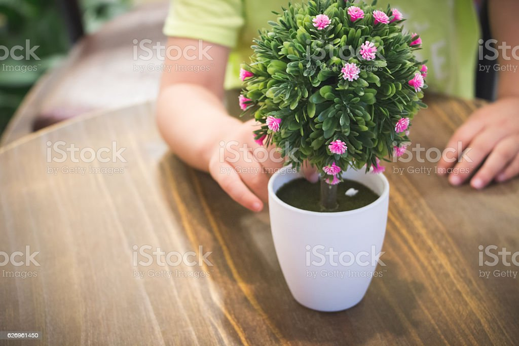 Home gardening planting house plant stock photo