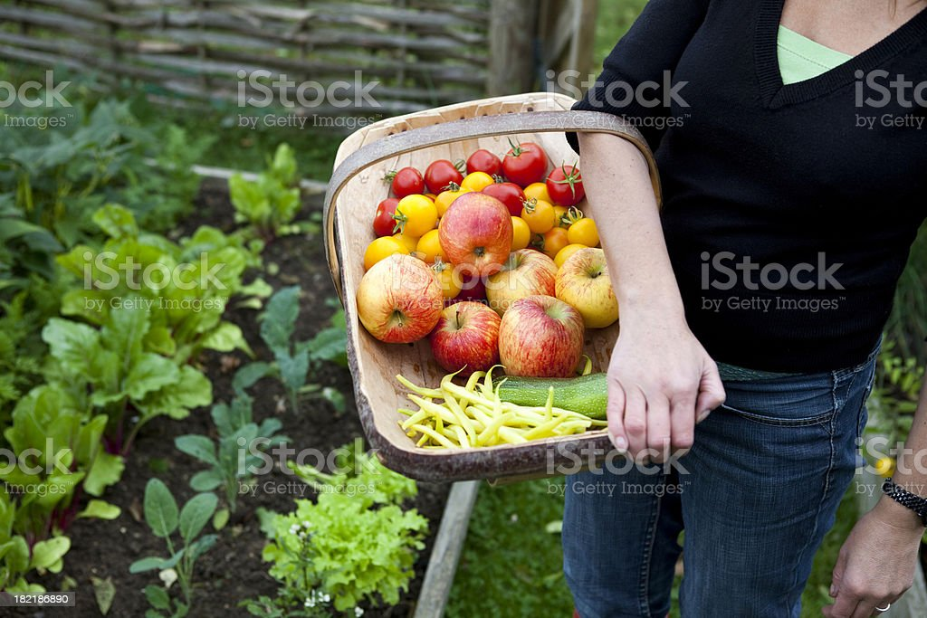 Home Grown Organic Fruit and Vegetable Harvest royalty-free stock photo