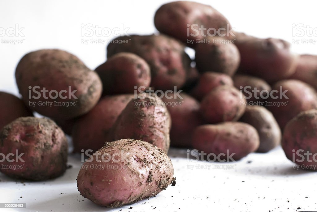 Home Grown Potatoes royalty-free stock photo