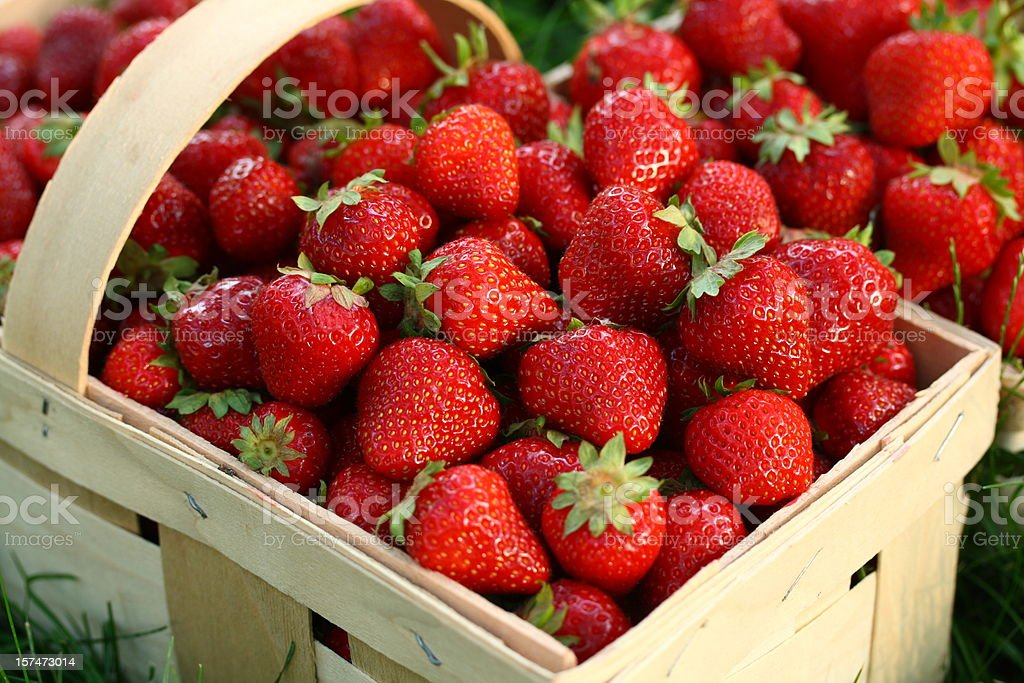 Home Grown Strawberries in Wooden Basket royalty-free stock photo