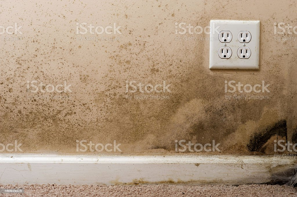 Home interior Black Mold on basement wall royalty-free stock photo